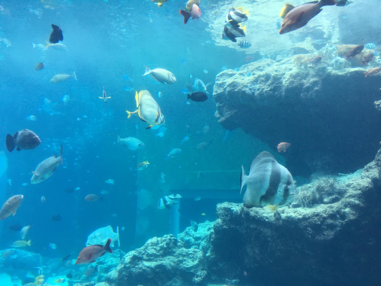 いろんな魚
